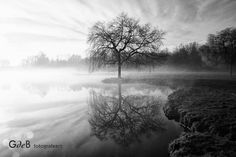 vijfhoekpark 1 Place, Diamond Heart, Photo Contest, Reflection, Country Roads, Trees, Number, Landscape, Nice