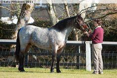 Connemara - stallion The Square Rigmarole