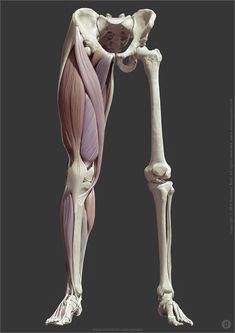 artstation jaunarajs anatomy jekabs leg ArtStation Leg anatomy Jekabs JaunarajsYou can find Anatomy reference and more on our website Leg Anatomy, Anatomy Poses, Anatomy Study, Anatomy Reference, Leg Muscles Anatomy, Pose Reference, Zbrush Anatomy, Human Muscle Anatomy, Human Anatomy Drawing
