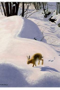 'Hare in the Snow' cards, pack of ten available for £4.99 from our online shop: http://www.liverpoolmuseums.org.uk/onlineshop/seasonal-christmas/hare-in-the-snow-card-pack.aspx