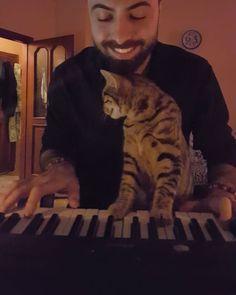 """18.4k Likes, 1,442 Comments - Sarper Duman (@sarperduman) on Instagram: """"If you want a true love, love animals ☺🎹 Gerçek bir sevgi istiyorsanız, hayvanları sevin.. 🎹☺ Music…"""""""