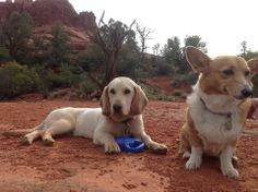 """""""Our Low-Riders being red-dirt-dogs a couple years ago! Sedona is a wonderful place to bring dogs.""""  #ElPortalSedona #SedonaGetaway #petphotocontest"""