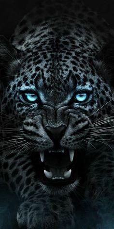 Jaguar Wallpaper, Wild Animal Wallpaper, Tier Wallpaper, Wolf Wallpaper, Tiger Wallpaper Iphone, Black Panther Hd Wallpaper, Angry Animals, Cute Animals, Majestic Animals