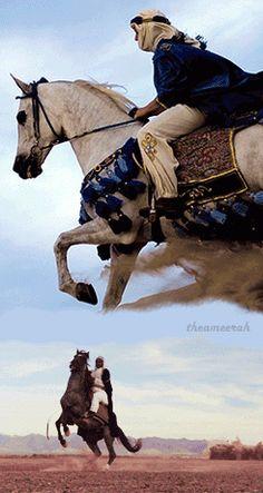 The Arabian Horse - Drinkers of the Wind Beautiful Arabian Horses, Majestic Horse, Pretty Horses, Zebras, Animals And Pets, Cute Animals, Arabian Costume, Arabian Art, Horse Videos