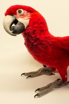 Lola the Green-Winged Macaw: Needle felted animal sculpture by Megan Nedds of The Woolen Wagon