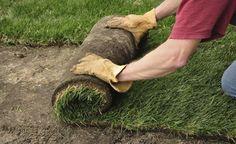 Rollrasen verlegen – Schritt für Schritt -  Rollrasen ist ideal für Besitzer kleiner Gärten, die ihren Rasen schnell nutzen wollen. Wir erklären, wie man die Rasenrollen fachgerecht verlegt.
