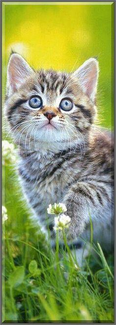 BEAUTIFUL KITTY #cat cute funny #Gepinnt von: Lika Yuna cat Urasoe
