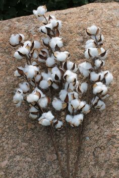 SHIPS FREE 3-32 Long Stem Cotton Bolls Natural by TheWreathShed