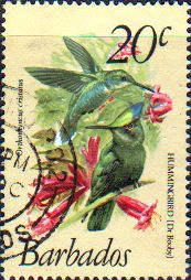 Barbados 1979 Birds SG 628 Fine Used SG 628 Scott 501 Other British Commonwealth Stamps here