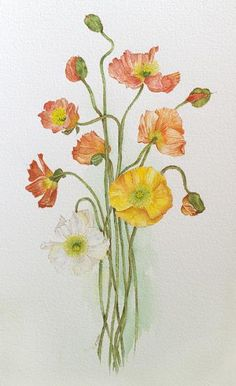 Charlotte Iliff   American Society of Botanical Artists