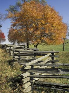 Split rail fence and tree with autumn colors at Hensley Settlement, Cumberland Gap National Historic Park, Kentucky, USA by Danita Delimont