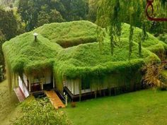 Earthship, Living Roofs, Unusual Homes, Green Architecture, Green Building, Go Green, Green Grass, Exterior, Landscape
