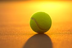 Find Tennis Ball On Court Close Sunset stock images in HD and millions of other royalty-free stock photos, illustrations and vectors in the Shutterstock collection. Tennis Shop, Le Tennis, Tennis Elbow, Sport Tennis, Tennis Wallpaper, Hd Wallpaper, Tennis Workout, Tennis World, 70s Aesthetic