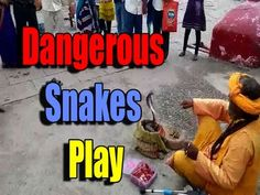 The Incredible Indian Snake Play/Amazing Cobra attack/Snake Charmers Play Music for Snakes Dance!!