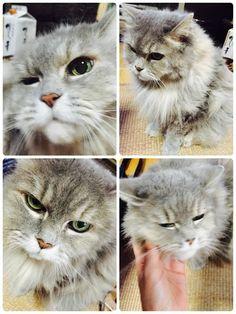 愛猫さくら姫 SHOOP+FACTORY(シュープ・ファクトリー)@オーナーブログ-45ページ目