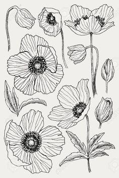 Beautiful Flower Drawings, Flower Art Drawing, Flower Line Drawings, Flower Drawing Tutorials, Leaf Drawing, Flower Sketches, Floral Drawing, Plant Drawing, Art Drawings
