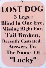 Funny Lucky Lost Dog Sign Picture | Funny Joke Pictures