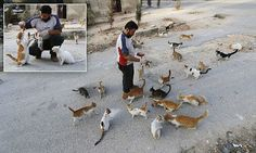Alaa has been feeding around 150 strays in Masaken Hanano, Aleppo, which has been abandoned because of shelling from forces loyal to Syria's president Bashar Al-Assad.