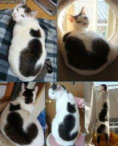 Cat On Your Cat