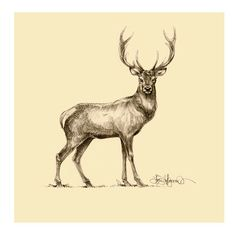 Deer drawing by Igor Lukyanov to be used for interior design of a hotel