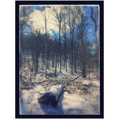 Blue and the Barren  #hamont #escarpment #trees #snowmageddon2016 #blizzard #blizzard2016 #hiking #railtrail #chedoke by thekinger
