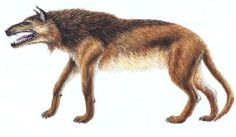 Andrewsarchus (12 feet long not including tail, 6 feet tall- This is one of the largest land predators. It also had the early stages of hooves... It's closest known relatives are small hooved creatures like sheep and goats... weird, huh!) Photobucket.