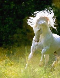 Running free! #horses #animals