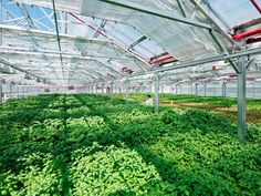 World's largest rooftop greenhouse is about to open in Chicago ...