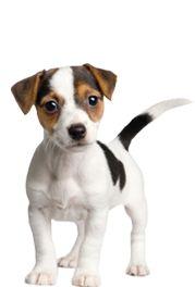 Dog Flea Treatment   Mobile Dog Wash and Pet Washing Service