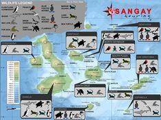 islas galapagos , mapa con la fauna de las islas