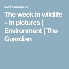 The week in wildlife – in pictures | Environment | The Guardian