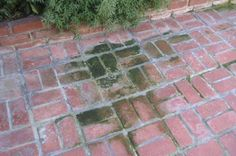 How To Remove Moss From Brick How What Amp Why Patio