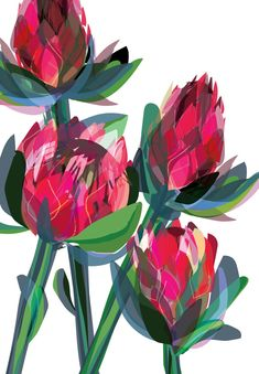 Red protea String Of Pearls, Summer Beauty, Pink Peonies, Daisy, Sky, Wallpaper, Pretty, Flowers, Inspiration