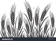 Barley Illustration Field of wheat, barley or rye vector visual illustration ...
