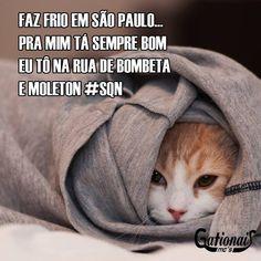 Este gato mal pode esperar para dar um rolê de Opala marrom. | 18 gatos que sabem que a vida é diferente da ponte pra cá