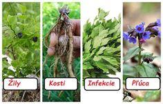 Bylinky a choroby, ktoré liečia. Aloe Vera, Garden Sculpture, Health, Outdoor Decor, Plants, Food, Health Care, Essen, Meals