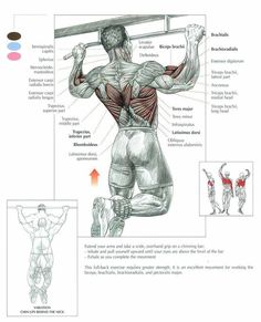 The Pullup Exercise Anatomy. Pullups are recognized as the king of the bodyweight exercises. And some will even argue that they're the king of the upper bod