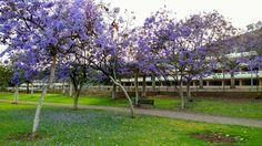 Canary Islands Photography: #Canaryflowers #ParqueSur #Maspalomas #GranCanaria...