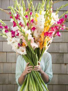 Den richtige Strauß finden mit dem Blumen-Knigge – Pflanzenfreude.de