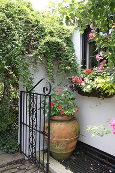 Love this large terra cotta pot