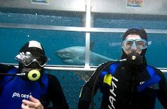 This is a photo from my first shark dive. The only time I take my breathing regulator out is if I need to personalize my #SleepNumber AirFit Adjustable pillows! #contest