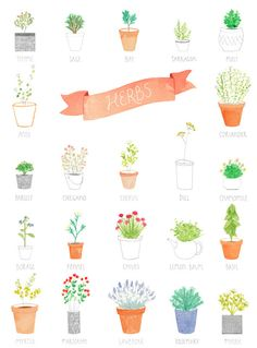 Delicious aromatic herbs by Amy Borrell. #illustration