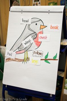 Kindergarten students learn what a label is during a bird inquiry