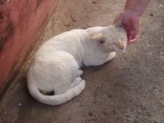 Happy Cat, Phitsanulok