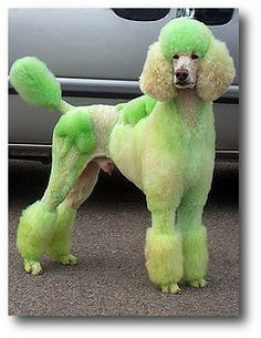 Green Spoo
