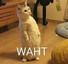 ❝𝐀𝐍𝐃 𝐈𝐅 𝐘𝐎𝐔'𝐑𝐄 𝐆𝐎𝐍𝐍𝐀 𝐂𝐀𝐋𝐋 𝐌𝐄 𝐀 𝐁𝐈𝐓𝐂𝐇, 𝐌𝐀… #fanfiction #Fanfiction #amreading #books #wattpad Funny Animal Jokes, Cute Funny Animals, Funny Animal Pictures, Animal Memes, Cute Baby Animals, Funny Images, Funny Cat Faces, Meme Faces, Funny Cats