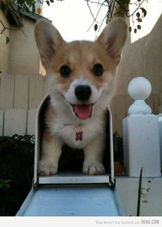 wish this was in my mailbox...