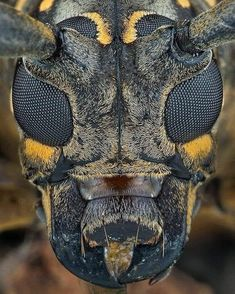 Weird Insects, Bugs And Insects, Micro Photography, Animal Photography, Weird Creatures, All Gods Creatures, Foto Macro, Microscopic Photography, Macro And Micro