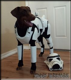 Here we honor those brave men and women that died fighting the rebel scum. Cute Dog Costumes, Baby Costumes, Costume Ideas, Starwars, Find Your Spirit Animal, Bird Barn, Barn Owls, Lego, Right Meow