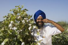 No, Monsanto is not killing Indian farmers.   Article breaking down the myths, the history, & what's going on in India.